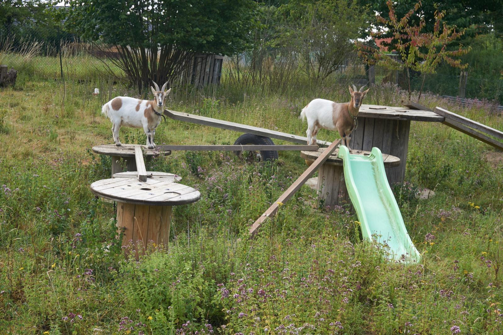 Accueillir des pèlerins dans son jardin !